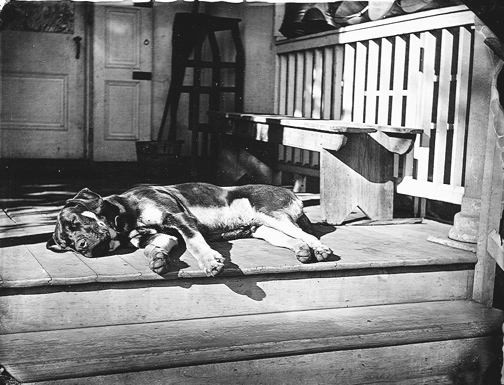 Every Day Better and Better Dog-on-porch When will NOW be the RIGHT time to change your life?